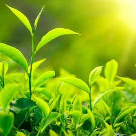 Přírodní šampon Zelený čaj